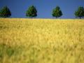 巴西南里奥格兰德州环境保护局为870兆瓦风电场授予初步许可证